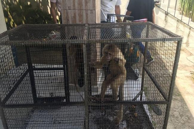«Amarran» a dos personas por introducción y explotación de animales exóticos en Punta Cana